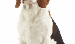Les amoureux des toutous vont adorer chien.fr