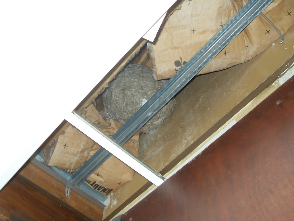 comment liminer un nid de gu pes. Black Bedroom Furniture Sets. Home Design Ideas