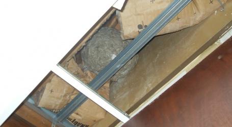 Comment éliminer un nid de guêpes ?